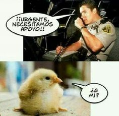 Haha the pollo Spanish Jokes, Funny Spanish Memes, Funny Images, Funny Pictures, Mexican Humor, Mexican Stuff, Humor Grafico, Really Funny, Funny Posts
