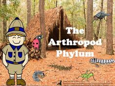 Price $3.00 Spiders, crabs, millipedes, centipedes and more.Have your students learn more about arthropod terminology, types of arthropod life and facts. Learners answer 30 questions after reading information and participating in science lesson activities. The Arthropod Phylum task cards can be used as a class game, in cooperative groups or as a science center.