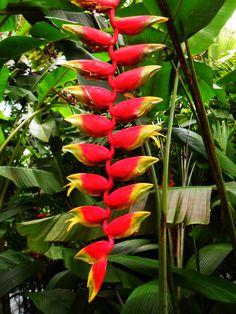 Hermosa flora encontrarás en Costa Rica.