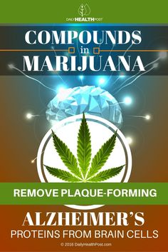 This isn't as strange as it may sound; science has long known that the brain and other organs contain cannabinoid receptors—receptors are protein molecules that receive signals from various chemicals in the body and serve as neurotransmitters.