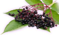 ElderberryWhile it is a beautiful plant, don't be fooled! This plant, often used in medicinal syrups, sodas and liquors can cause a severely upset stomach if consumed incorrectly. via KitchenDailyCanada