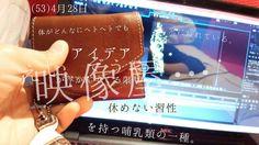 (53)4月28日 #小さいふ #だいやりー   埋め込み画像への固定リンク Twitter