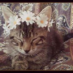 Baby boho kitty kitty crowns available   link in my bio #bohokitty #boho #kitty #kitten #cute #flowercrown #catlovers  #catsofinstagram #festival #petsofinstagram #kittycat #babe #adorable #freespirit #gypsy #fallwedding #hipster #summer #love #highsociety #kittensofinstagram #nature #ilovecats #bohowedding #beautiful #beauty #instagood #goodvibes #goodvibesonly #cats