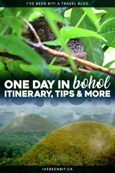 Home of the adorable Tarsiers & the Chocolate Hills, at least 1 day in Bohol is a must while in The Philippines! Plan a Bohol day tour & visit the island! Ireland Vacation, Ireland Travel, Galway Ireland, Cork Ireland, China Travel, Japan Travel, Paris Travel, Travel Guides, Travel Tips