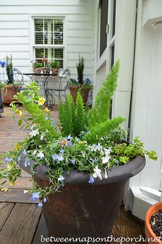 Great advice from Susan at Between Naps on the porch - for those of you who, like me, are planter challenged. :)