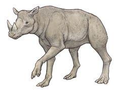 Diceratherium armatum