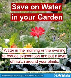 Save on Water in your Garden