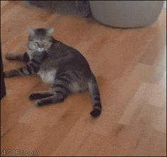 21 Best GIFs Of All Time Of The Week #173 from best GOAT and Best of the Web