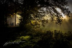 morning light by Matthias Gaberthüel Morning Light, Pathways, Mother Nature, Country Roads, Trees, Seasons, Board, Outdoor, Beautiful