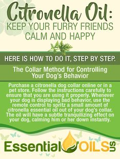 Studies show that dog collars that spray miniscule amounts of citronella oil upon activation by a remote control work more effectively than shock collars. This completely ethical and safe method can stop a dog from barking and exhibiting bad behavior. Citronella Essential Oil, Citronella Oil, Essential Oil Bottles, Essential Oils, Keeping Mosquitos Away, Bacterial Infection, Carrier Oils, Dog Collars, Oil Diffuser