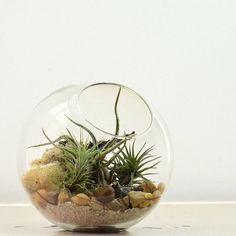 Air Plant Terrarium// Half Slope Bubble// Small// by PinkSerissa