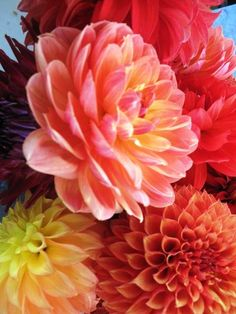 Love dahlias! Was one of my mom's favorites too!