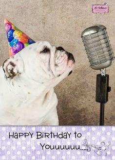The Number Happy Birthday Meme Bulldog Happy Birthday, Cute Happy Birthday, Happy Birthday Messages, Happy Birthday Images, Happt Birthday, First Birthday Banners, Animal Birthday, Happy Birthday Funny Humorous, Birthdays