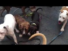 Daphne, Thales, Turbo and pups