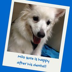 We love helping improve the quality of our patients' lives! Milo's clean teeth not only look good but contributes to his overall good health. How clean are your dog's teeth?