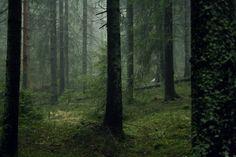 The Wood's Call- Efflorescence- YA/NA Paranormal Romance/Urban Fantasy- Read For Free On Wattpad