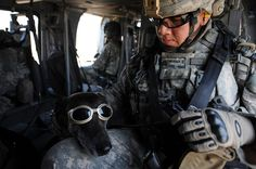 This Doberman is a brave partner on the front lines of conflict. And I love his little goggles.