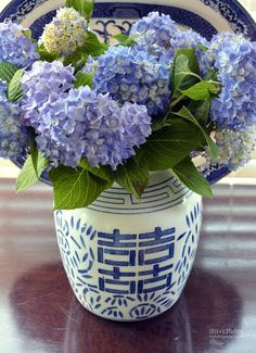 #hydrangea - blue and white decor