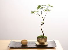 Bonsai by Sinajina