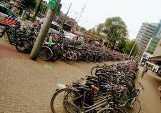 Bicis, bicis y más bicis. Holanda.