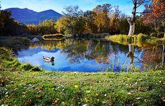Title  Reflections At The Duck Pond - Fine Art By Lynn Bauer   Artist  Lynn Bauer   Medium  Photograph - Photography/digital Art