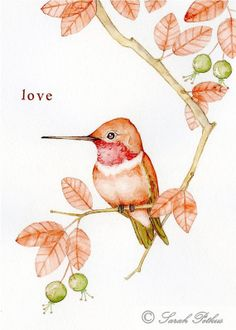 Roufus Hummingbird -8x10 archival bird art print