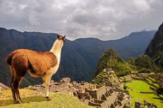 Just looking at Machu Picchu Photo by O. Castro Jr -- National Geographic Your Shot