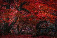 The Red Forest - LIMITED EDITION PRINT by Ben Robson Hull
