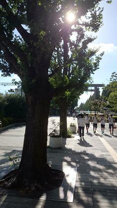 靖国神社下の街路樹