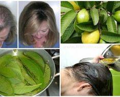 guava-22-919922d