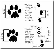 otter footprint stencil google search animal stencils rh pinterest com Grizzly Bear Tracks Clip Art Track Meet Clip Art