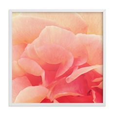"""sherbet rose 3"" - Art Print by Niki Digrigorio in beautiful frame options and a…"