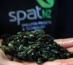 New Zealand aquaculture will be getting stronger mussels, thanks to some heavyweight Kiwi science underway in Nelson for a new mussel hatchery. Tree Rope, Mussels, Kiwi, Science, Vegetables, Mystery, Fishing, Food, Australia