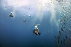 Sardine Run Expeditions on the Wild Coast of South Africa Under The Sea, Bald Eagle, South Africa, Cool Photos, Coast, Wildlife, Adventure, Running, Nature