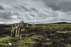 Wulkany świata Blog: Słoje przyrostowe drzew datują dawną erupcję na Islandii