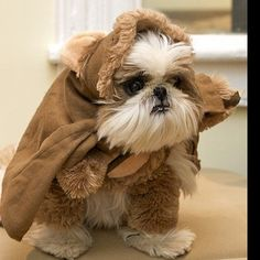 Ewok outfit. Always wanted to dress up my Lhasa Apso in one. The Shih-Tzu at work would look great in it.