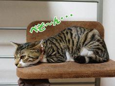 猫団子への道|うにオフィシャルブログ「うにの秘密基地」Powered by Ameba