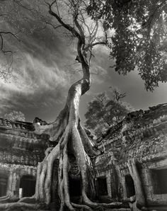 Rilke's Bayon, Siem Reap, Cambodia, 2007. Buddhist temples are straddled by the immense trunks of huge ficus trees whose serpentine roots pry apart the ancient stones in a desperate journey to find soil.   | Credit: Beth Moon