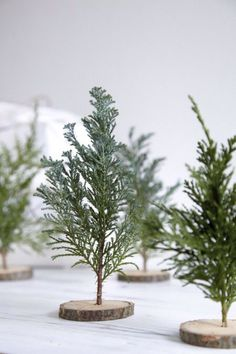 DIY mini christmas trees with little wood slices and greenery twigs // DIY mini árvore de Natal! Mini Christmas Tree, Simple Christmas, All Things Christmas, Winter Christmas, Xmas Tree, Miniature Christmas, Christmas Detox, Homemade Christmas, Merry Christmas
