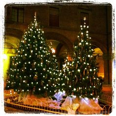 Christmas tree in Bologna City Hall by @franci1378