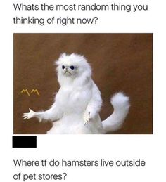 43 Great Pics And Memes to Improve Your Mood - Funny Gallery Funny Animal Memes, Stupid Funny Memes, Funny Relatable Memes, Funny Posts, Funny Animals, Funny Shit, Funny Stuff, Really Funny, Funny Cute