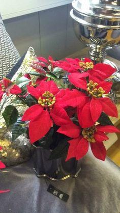 Nydelig og meget naturtro julestjerne som ikke trenger en eneste dråpe med vann. Måler 35 cm i høyden og 30 cm i diameter. Finnes i både hvitt og rødt.
