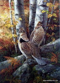 Rosemary Millette Late Season Solitude- Ruffed Grouse