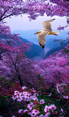Beautiful Nature Pictures, Beautiful Flowers Wallpapers, Beautiful Nature Wallpaper, Amazing Nature, Beautiful Birds, Beautiful Landscapes, Animals Beautiful, Beautiful Places, Romantic Images