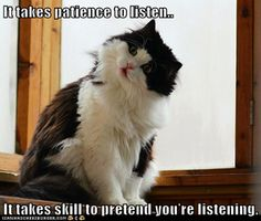 What a cute kitty with wise words.