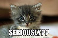kitten15 -  seriously??