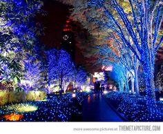 Christmas lights in Tokyo, Japan…