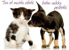 Kortit joissa on kissa ja koira