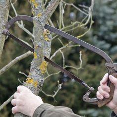 pflaumenbaum richtig schneiden obst pinterest pflaumenbaum g rten und pflanzen. Black Bedroom Furniture Sets. Home Design Ideas