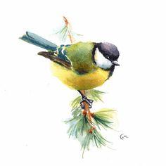 Watercolor Tit Bird  Original Painting 7 4/5 x 7 4/5 by CMwatercolors